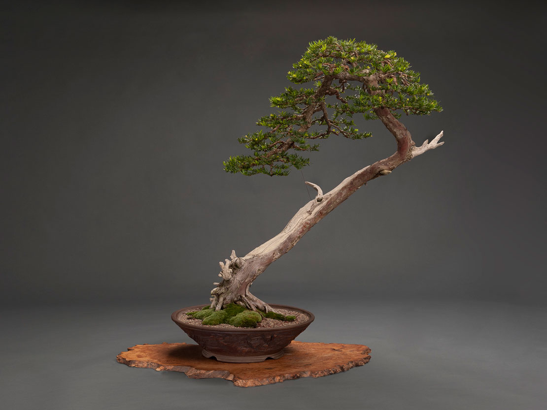 hp-photo-bonsai-plant